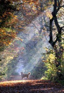 ...bei euren Wald-Herbst-Fotos ;) Hier meine sicht der dinge *g (piqs.de ID: 3cd8e7e709cd98b92596b57113c12dd1)